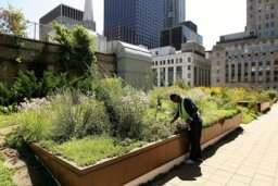 What's the least expensive way to green your roof?