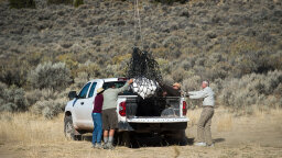Nearly Complete Tyrannosaur Skeleton Found in Utah