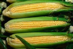 Corn: Natural Weight-Loss Food