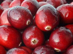 Cranberries 101