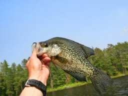 Top 4 Crappie Fishing Tips