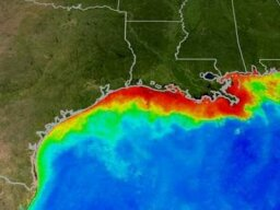 Should we be worried about the dead zone in the Gulf of Mexico?