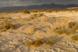 The Ultimate Death Valley National Park Quiz