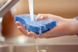 Can you disinfect kitchen sponges?