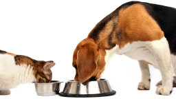 Can I Feed My Dog Cat Food in a Pinch?