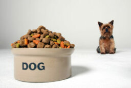 How important is protein in a dog's diet?