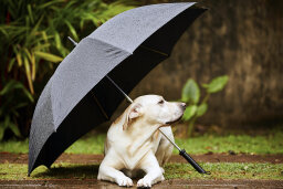 Can dogs sense storms?