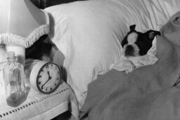 How do dogs perceive time?