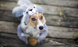 10 Fun for Fido Halloween Costumes