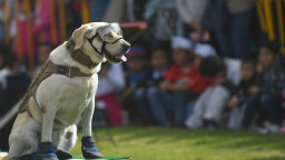 10 Dogs Who Made History