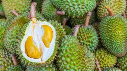 Cancer Scientists Sniff Out the Genes Behind Durian's Famous Stink