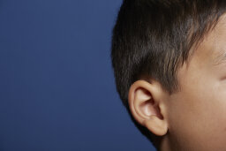 Where does earwax come from?