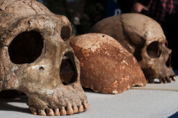 10 Extinct Hominids