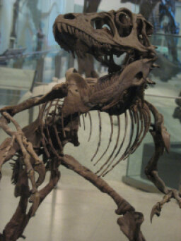 Family Vacations: American Museum of Natural History