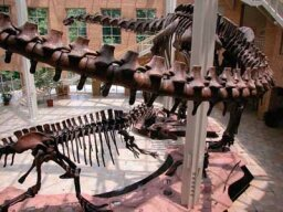 Family Vacations: Fernbank Museum of Natural History