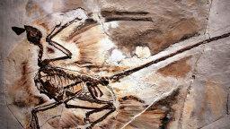 Velociraptor Alert: The Feathered Dinosaur Quiz
