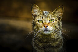 Do feral cats spread disease?