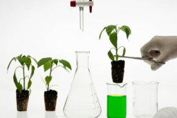 Are foods made using biotechnology safe to eat?