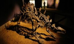Fossils: From Organic to Rock in a Matter of Millennia