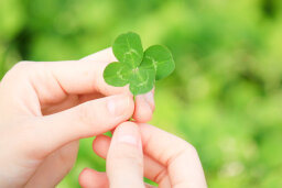 What's the best way to find a four-leaf clover?