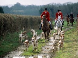 What's so bad about fox hunting?