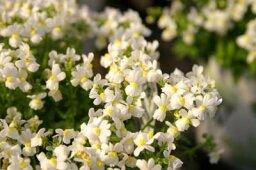 Garden Care: Annuals