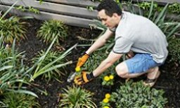 Gardening for Beginners: Tips for First-Timers