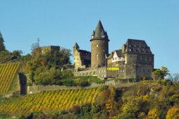 Ultimate Guide to German Wines