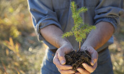 If I plant trees in my yard, will it offset global warming?