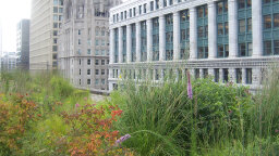 Why Don't More Cities Require Green Roofs?