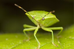 How many bug species exist?