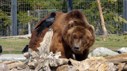 Meet the Montana Grizzly Bear Product Testers