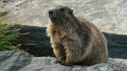 Groundhogs Are More Than Just Meteorologists