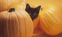 10 Fun Halloween Facts for Families