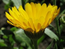 Herbal Remedies for Dental Problems