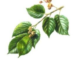 Herbal Remedies for Splinters