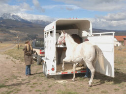 How Horse Trailer Towing Works