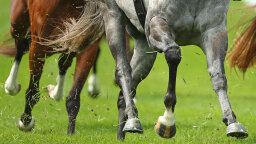 New Research Helps Confirm Why Horses Have Single-toed Hooves