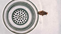 5 Most Common Household Pests and How to Control Them
