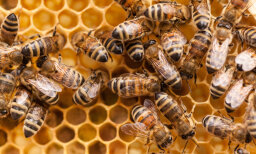 The Ultimate How Bees Work Quiz