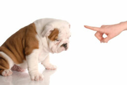 How to Clicker-train a Dog