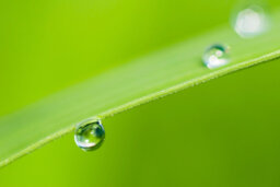 How to Do Raindrop Photography