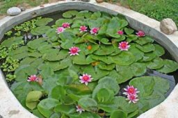 How to Install a Water Garden Pond