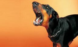 How to Solve Dog Behavior Problems