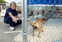 All About the Humane Society Fund