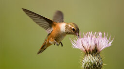 Hummingbirds: What to Feed Them and a Springtime Q&A