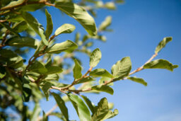 How to Improve Skin with Tea Tree Oil