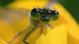 Alarming Drop in Populations Has Scientists Warning of 'Insect Armageddon'