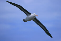 Why is it bad luck to kill an albatross?