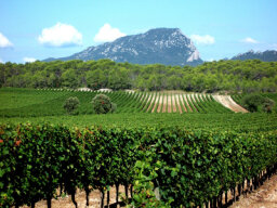 Ultimate Guide to the Languedoc Roussillon Wine Region